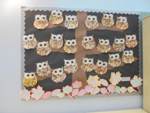 Owl Display