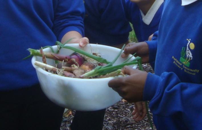 Year6 harvesting onions (for spaghetti boognaise